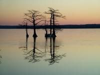 Reelfoot Lake in Tennessee 1