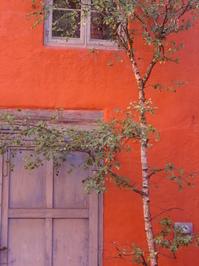 birch in central Copenhagen