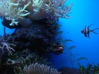 Nemo ad Friends 1