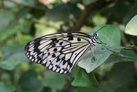 Lots of butterflies 13