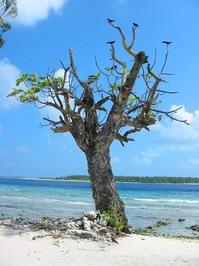 Bush In maldives