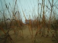 Spirit Sands Manitoba 1