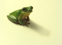 Pet Tree Frog 2