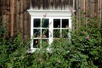 Window with bush
