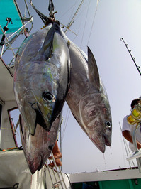 Gomera Deep See Fishing 1