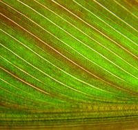 Leaf Texture06