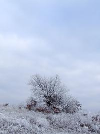 Hilltop bush