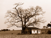 Old farm - sepia