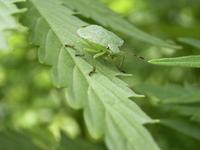 bug macroshot 2