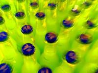 bottles 8
