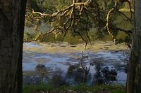 Cockrone Lagoon trees 3