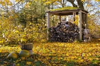 Danish Autumn