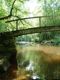 River in Forest, Burgundy, Fra
