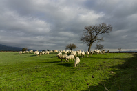 The pasture 1