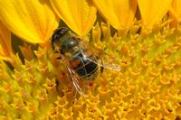 blind fly