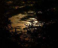 Eery Moon