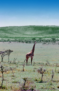 Wild life in african landscape 3