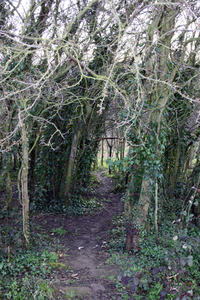 secluded path