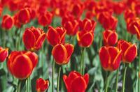 Flowers in Stanley Park 4