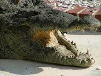 Gatorland - Orlando, Florida U