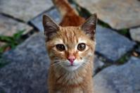 cat in act 2