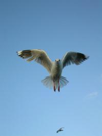 Free as a bird - 2