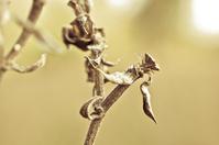 Nature Close-Ups 2