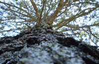 Beautiful tree 1