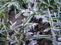 november frost 5