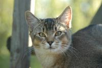 Cat Story 14