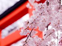 cherry and shrine