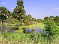 Palm Swamp 2