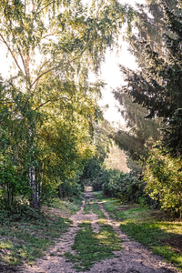 sunny forest walkway