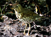 bird in the mud
