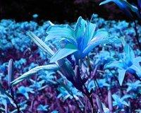 Frigid Bloom