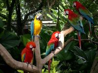 Singapore zoo parots