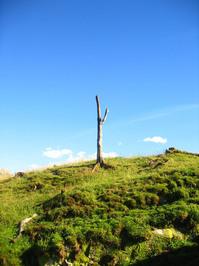 lonley dead tree