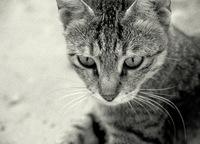 cat in grain 2