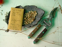 A Gardener's Work Table