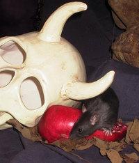 Nico & the skull