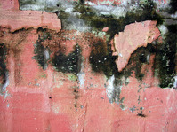 wall decay