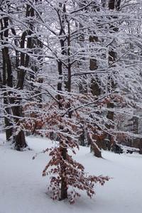 Winter Wonders 4