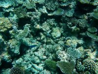 House Reef 4
