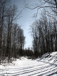 Dream Trails