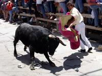Facing the bull 2