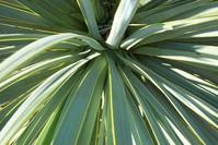 leaf textures 1