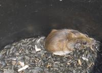 Garage Mouse