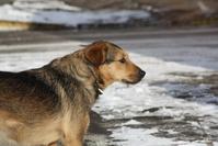dog on snowy landscape 3