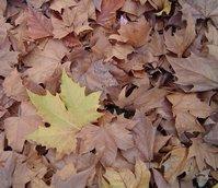 Micro landscape 4 - Autumn