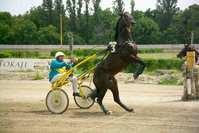 Crash on the Horseracing 1